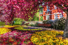 Lutherstadt Wittenberg (Matthias Harbers) Tags: park city flower tree photoshop germany spring sony blumen cybershot elements labs dxo traveling hdr wittenberg reise topaz saxonyanhalt 3xp photomatix lutherstadt lutherstadtwittenberg rx100