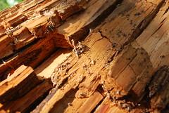 Decaying wood (Two_tango) Tags: wood madera decay struktur holz verfall zerfall