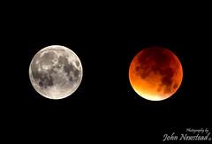 Supermoon lunar eclipse (johnnewstead1) Tags: uk moon eclipse north norfolk super fullmoon lunar lunareclipse bloodmoon walsham supermoon johnnewstead superbloodmoon