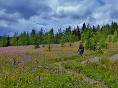 7-101 (Gnarlene) Tags: flower hiking banff healypass monarchramparts