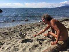 minha amiga a gaivota - my seagull friend (Pierre♪ à ♪VanCouver) Tags: canada vancouver pierre seagull gaviota mouette wreckbeach gaivota georgiastrait clothingoptional