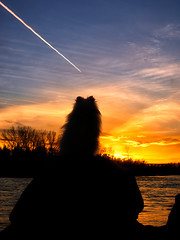 Watching the jet and sunset (MattysFlicks) Tags: park lighting pink trees sunset red sky orange cloud dog sun white canada black color calgary fall water colors silhouette yellow rock set clouds river hair puppy fur photography stand photo furry rocks colorful stream warm sitting glow looking vibrant sony stock jet shapes deep trails dramatic free bank ears trail alberta bow waters doggy alpha pomeranian chem smc enjoying skys doggie chemtrails chemical strands timing perky choppy bowmont 35mmf35 pentaxk a6000 ilce6000