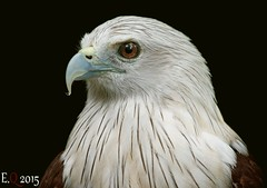 (mohd alsulaiti) Tags: birds canon lens google zoom arabic explore arab 777 len doha qatar nationalgeographic 400mm natgeo 2015         arabphoto  instagram   mohdalsualiti enjoyqtr instagramenjoyqtr