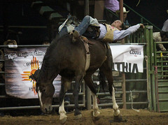 2015 Turquoise Circuit Finals Rodeo (antelopewells) Tags: rodeo bronc
