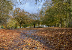 cemetery lane (rich01535) Tags: morning autumn trees wet cemetery grass leaves 35mm nikon path branches lane fullframe d610