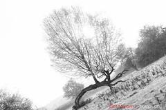 Hatfield_Forest-50 (Eldorino) Tags: park uk morning autumn trees nature forest sunrise landscape countryside nikon britain centre jour hatfield bishops stortford essex hertfordshire stanstead hatfieldforest