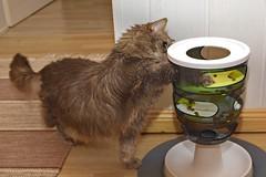 IMG_5757 (d_fust) Tags: cat kitten gato katze 猫 macska gatto fust kedi 貓 anak katt gatito kissa kätzchen gattino kucing 小貓 고양이 katje кот γάτα γατάκι แมว yavrusu 仔猫 का बिल्ली बच्चा