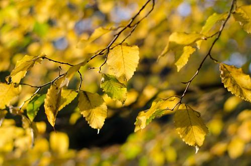 Autumn in London ©  Still ePsiLoN