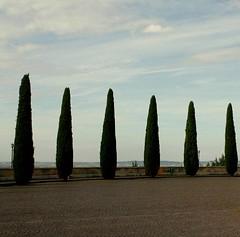 Verona IMG_2538 (nb-hjwmpa) Tags: italien trees italy italia verona bume zypressen