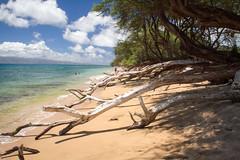 Portfolio-412.jpg (keithwills) Tags: hawaii keith wills scphoto keithwillsscphoto