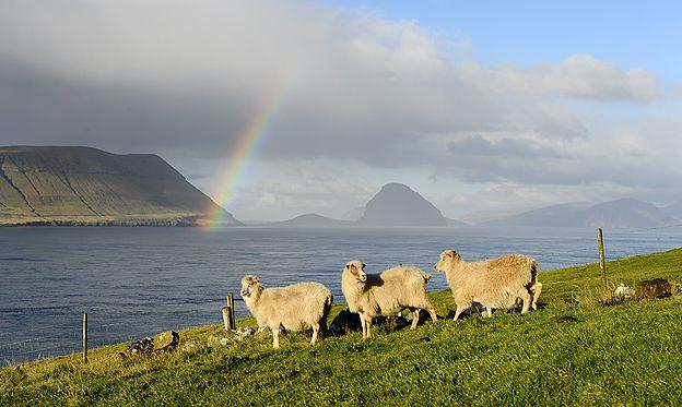 Faroe 1