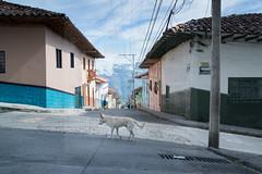 Colombian Vertigo 2015- www.wmaisy.com -27 aout 2015 -271.jpg (Wilfried Maisy Photojournaliste) Tags: photography photojournalism co antioquia colombie photojournalisme salamina photographiehumaniste photographiedocumentaire