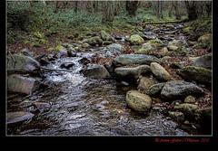"""El Bosc II """"Quinto Real"""" (Eugi- Navarra - Espanya). (Antoni G.V.) Tags: españa hojas agua bosque aigua arroyo piedras d800 navarra bosc espanya pedres riera fulles eugi"""
