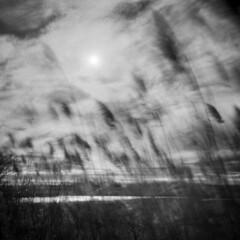 Nelson Island Morning #13 (LowerDarnley) Tags: ocean longexposure reeds ma marsh mamiya6 rowley infraredfilm efkeinfraredfilm thegreatmarsh