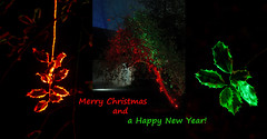 Merry Christmas and a many happy picture taking in New Year everyone! (smir_001 (on/off)) Tags: westonbirt trees colour winter december plants forest park light night enchanted illumination red orange mystery colourful enchantedwood2016 magical magicallight canoneos7d nature outdoors uk westonbirtarboretum arboretum forestrycommission britishparks parks england southgloucestershire