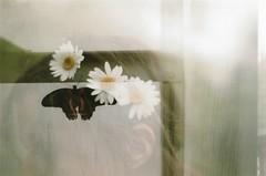 Dreaming (Lore Stars) Tags: film analógica pentaxmv autochinon50mmf17 doubleexposure butterfly london girl retrato portrait flowers head fujicolor100