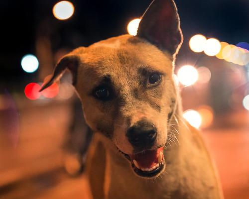 Steet Dog