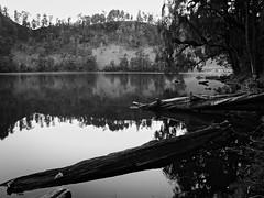 Solitude (elly.sugab) Tags: lake water rainforest log wood outdoor landscape ranukumbolo semeru mountain bw blackwhite monochrom monochrome blackandwhite