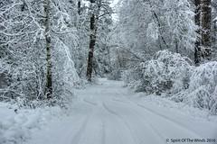 "On A Snowy Road (jimgspokane) Tags: winter winterroads snow turnbullnationalwildliferefuge ""nikonflickraward"" otw"