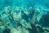 Under The Sea - Grecian Rocks (aaronrhawkins) Tags: snorkeling ocean atlantic keylargo florida shallow grecianrocks swim swimming coralreefstatepark floridakeys caribbean underwater aaronhawkins fish tropical