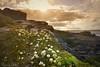 Watching the flowers grow (Sumarie Slabber) Tags: flowers hermanus sumarieslabber southafrica nature landscape white clouds rocks beach wild sunrise inexplore