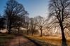 Path of Silhouettes (Baker_1000) Tags: 2016 bristol ashtoncourt sunrise dawn morning firstlight goldenhour frost winter nikon d90 nikond90 raw