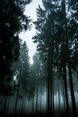 The Fog ... (Monnemerbuh) Tags: fog nebel wald forest bäume trees düster scary rheinlandpfalz fisheye walimex deutschland germany ausflug dezember december nature natur 2016 tannen a6000 sony alpha alpha6000
