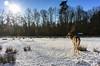 Rotwild im fränkischen Winter (BLUESPACES PHOTOGRAPHY) Tags: nikon coolpix a reh winter schnee sonne gegenlicht