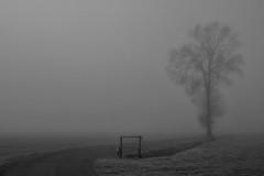 la curva (mat56.) Tags: paesaggi landscapes paesaggio landscape nebbia fog misty albero tree curva curve bianco black nero white atmosfera atmosphere inverno winter guzzafame sennalodigiana lodi lodigiano lombardia padana pianura antonio romei mat56