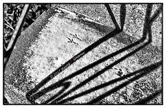 Signs of spring....bird tracks (Heinz9577961) Tags: leicam2 summilux50mmf14le blackchromeedition trix200 hc110b monochrome blackandwhite bw blackdiamond