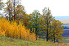 Living standards (gráce) Tags: tree trees grass forest grove wood nature landscape naturewatcher naturesfinest vast vastness vastitude wide wideopenspaces canon canoneos550d autumn autumntints coloursofautumn fall scape hill fields