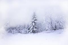 Winterwald am Feldberg (pwendeler) Tags: winter wald wood tree baum schnee snow landscape winterlandschaft landschaft winterlandscape sonynex7 feldberg hessen arbre