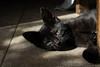 Irati (Euge Ibero) Tags: gato cat felino feline animal canon light shadows black eyes