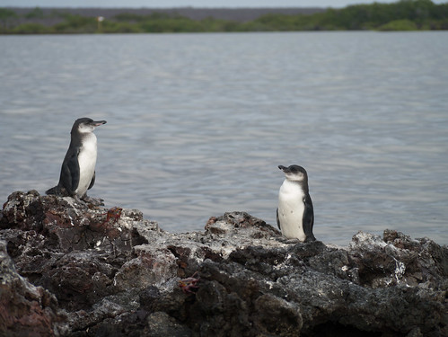 "Galapagos-58.jpg • <a style=""font-size:0.8em;"" href=""http://www.flickr.com/photos/91306238@N04/32321552232/"" target=""_blank"">View on Flickr</a>"