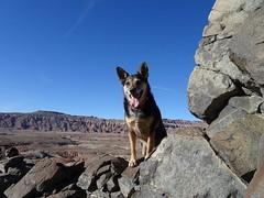 Frikka On Volcanic Dike (Bob Palin) Tags: dogs utah orig:file=20170314xv00156 waynecounty usa dog animal hiking club100 15fav instantfave 100vistas ashotadayorso 510fav 1025fav 100v10f
