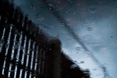 Raindrops (Rob₊Lee) Tags: ripple fence rain raindrop puddle drizzle dusk powerline sky garden