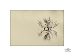 Water World (silver/halide) Tags: reflections flood reservoir stithians highkey johnbaker d750