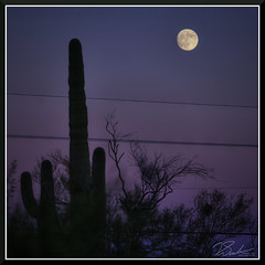 SaguaroFullMoon_7668d (bjarne.winkler) Tags: day8 photo foto safari full moon lunar over land of saguaro desert cactus plants biosphere 2 north tucson az