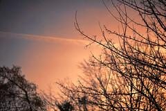 weer-een-mooie-lentedag-zonsopkomst (Don Pedro de Carrion de los Condes !) Tags: donpedro d700 lente spring sunrise trees takken botten voorjaar detail knoppen opspringen vibrant kleurrijk ochtend ochtends sky trail bomen uitzicht belofte weer voorjaarsweer fragiel