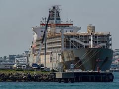 Bader III (aushiker) Tags: marine wharf livestockcarrier baderiii arabshipmanagement