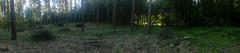 Forest panorama (adriank1410) Tags: light summer sky holidays memories poland polska wakacje lato wspomnienia iphone5 iphoneography lublinvoivodeship