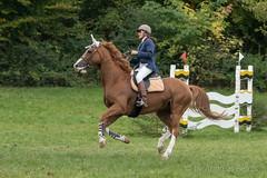 DSC01877_s (AndiP66) Tags: springen derby wohleiberg derbywohleiberg bern samstag saturday 3oktober2015 2015 oktober october pferd horse schweiz switzerland kantonbern cantonofbern concours contest wettbewerb horsejumping springreiten pferdespringen equestrian sports pferdesport sport sony sonyalpha 77markii 77ii 77m2 a77ii alpha ilca77m2 slta77ii sony70400mm f456 sony70400mmf456gssmii sal70400g2 andreaspeters frauenkappelen ch