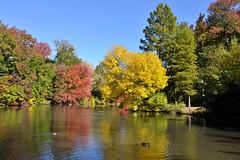 Central Park (Eddie C3) Tags: newyorkcity autumn centralpark autumncolor thepool nycparks