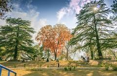 A sunny Day (Abbottabad) (Hasankazmi) Tags: green publicpark abbottabad ladygarden hasankazmi