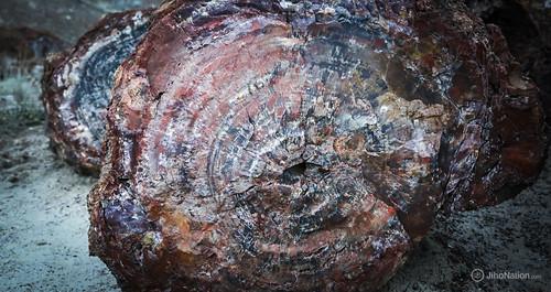 JihoNation-jiho-sohn-baltimore-photography-0018-IMG_8656 petrified-forest-arizona-national-park