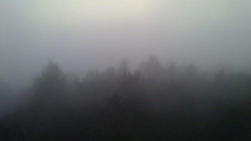 Hutwisch im Nebel 9