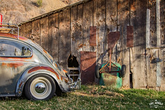 I've Seen Better Days (Eric Arnold Photography) Tags: vw volkswagen bug beetle oval window 1957 patina rust rusty chrome roof rack coke cocacola cooler barn shed abandoned old decrepit rundown vehicle auto automotive outdoor shadow trees utah ut hobble creek springville low lowered 2016 skate skateboard car