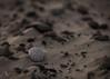 Stone on the beach (sharken14) Tags: skagen grenen denmark nikon d750 stone sten sandstrand beach sand ibahlén