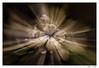 zoom during exposure (tom22_allgaeu) Tags: nikon tamron zoomduringexposure zoom 18270mm lightroom d7200 nikfilter langzeitbelichtung