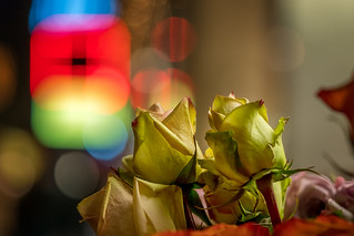Night roses in the city...